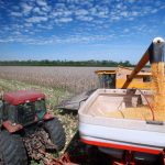 Syngenta Genetically Modified Corn Lawsuit: What Farmers Need to Know